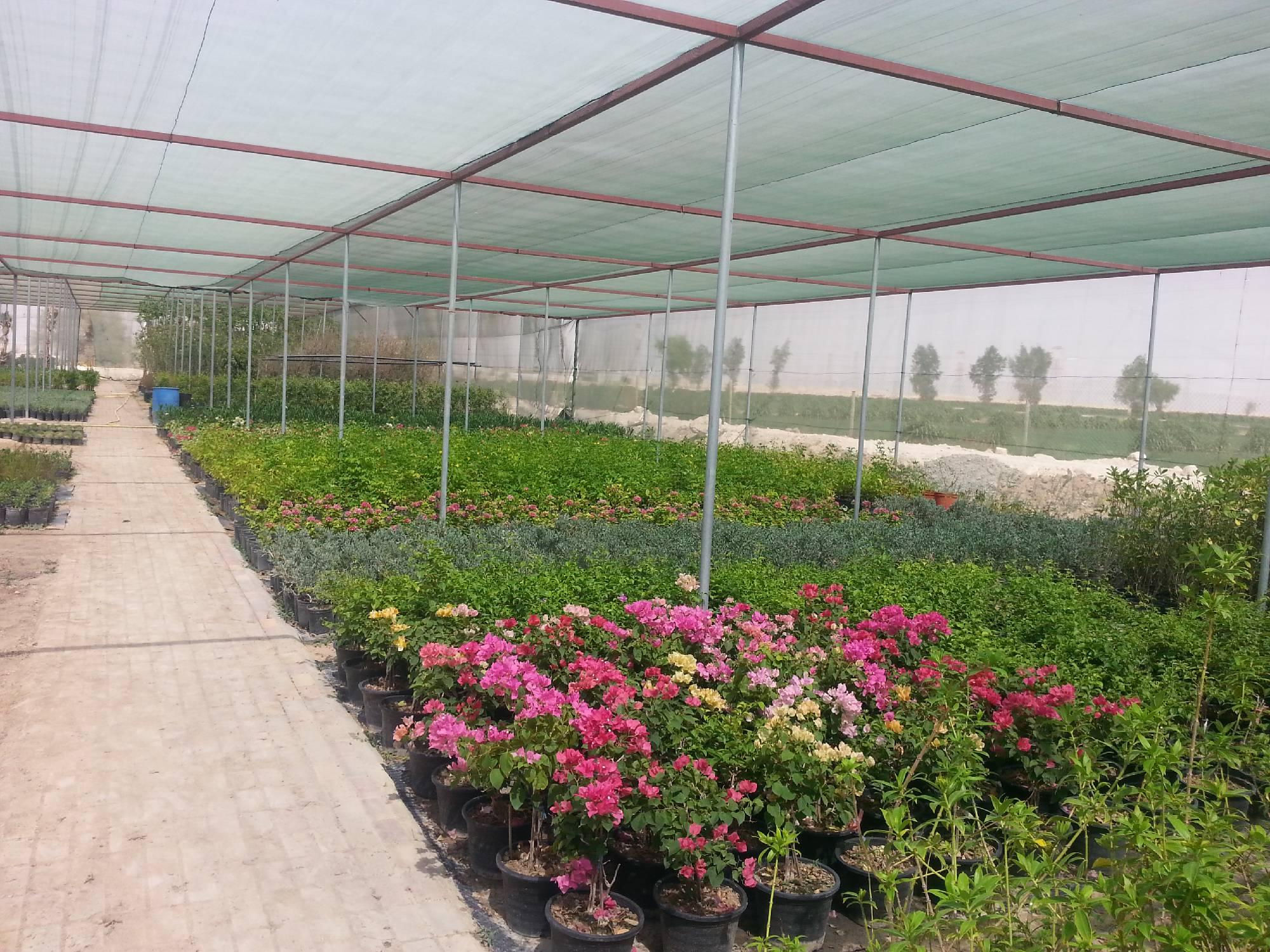 Al Naqi Landscape Company W.L.L Qatar   Doha   Landscape ...